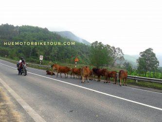 Central Vietnam by motorbike