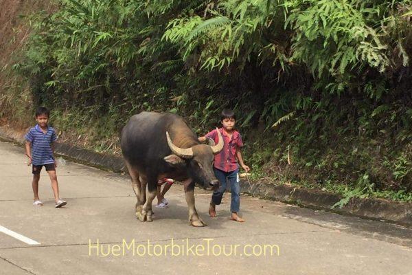 Motorbike tour on Ho Chi Minh Trail Vietnam
