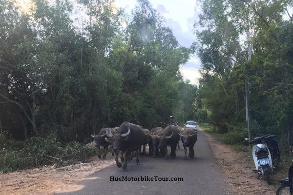 hoi an hue jeep tour hai van pass